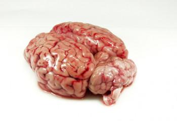 Cervelles de Porc x4